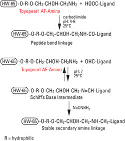 AFC_Amino_fig1_coupling.jpg