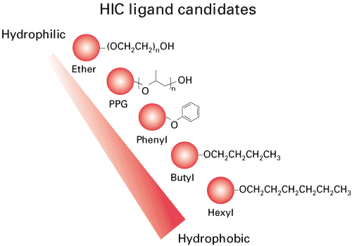 HIC ligands